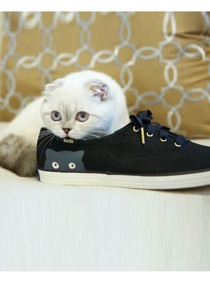 Lorsque le petit chat de Taylor Swift devient l'égérie de sa nouvelle ligne de baskets.