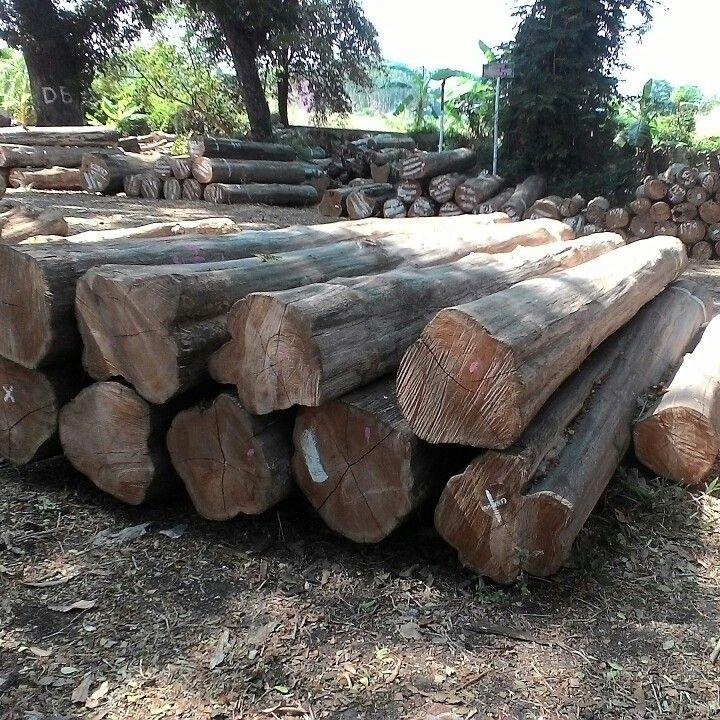 jati wood