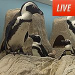Penguins, Puppies, Sharks and so much more in the live cams on Animal Planet.  Dare you not to smile...