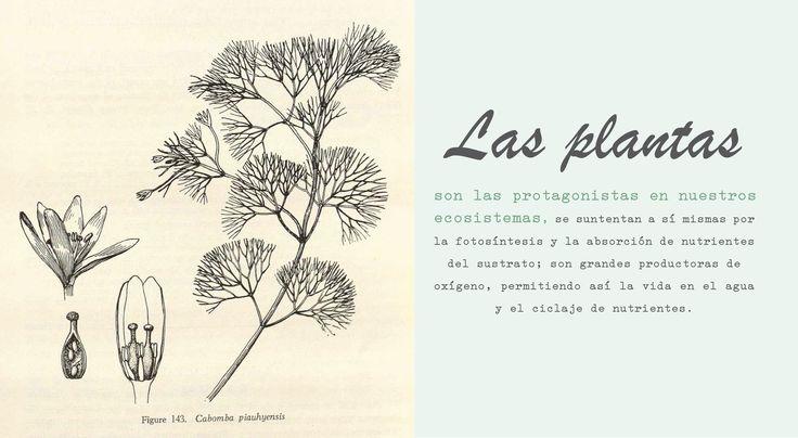 Las plantas son las protagonistas!