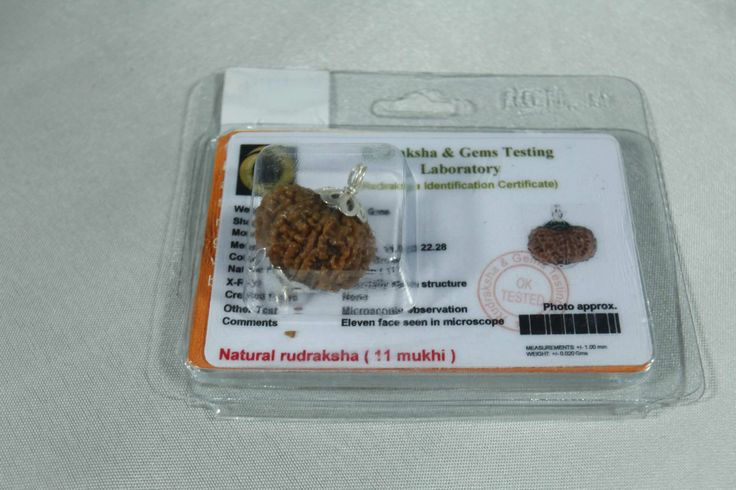#Rudraksha of 11 #Faces / #Good #Luck. . It increases the #wealth and the #prosperity.  It is capable of giving #instantaneous #results. Promotes physical and mental health. It helps women who cannot have #children. Increase energy power and mental: #stamina. Relief in #circulatory system diseases.