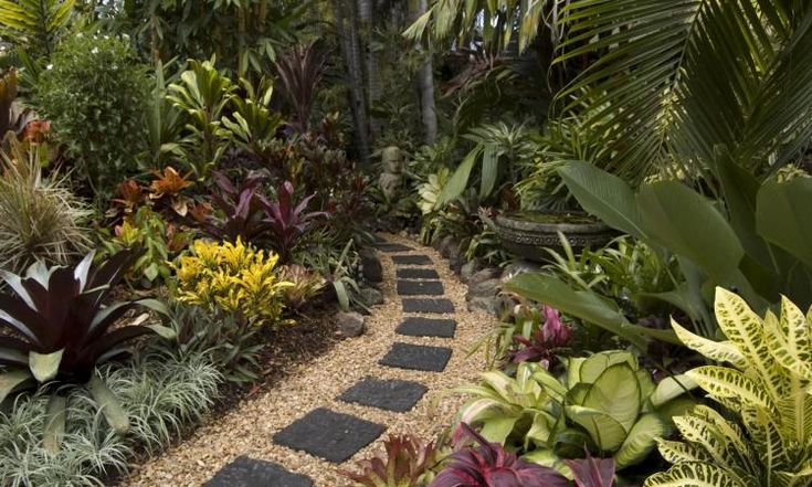 an interesting paved path surrounded by lush tropical plants in brisbane  australia