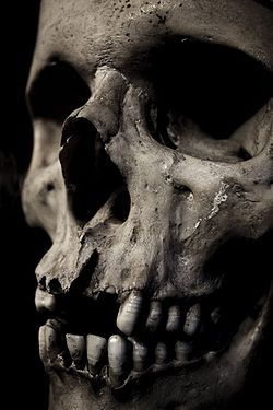 Skulls are fascinating... reminders... reflections of our own mortality.