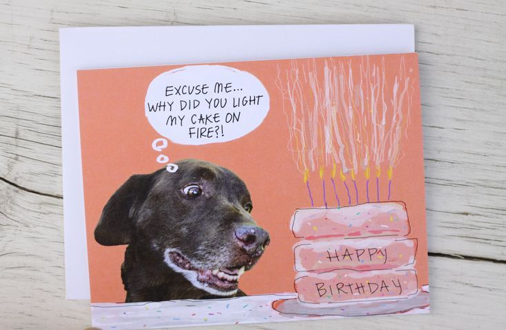 Funny Dog Birthday Card Chocolate Lab Birthday Cake On Fire by