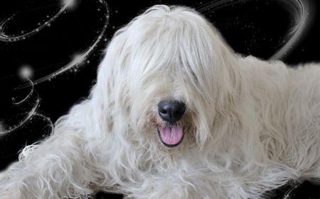 South Russian Sheepdog photo | South Russian Shepherd Dog *** - Dogs & Animals Background ...