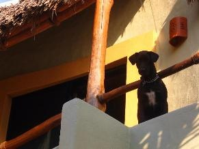 House and Pet(s) Sitter Needed Aug and Sept    Location El Rebalse, Barra de Navidad, Playa de Coco, Costalegre  Colimilla,Colima Mexico  Availability Aug 19,2013  For Just under a month, until Sept. 17th or so.   Short Medium Term  Not a member?Join today to contact t  We are hoping to find a couple to house and pet sit from mid August to mid Sept.    We have a beautiful 4 bdrm 5 bath home one block off the open ocean on Playa de Coco in Jalisco. between Barra de Navidad & Cihuatlan ...
