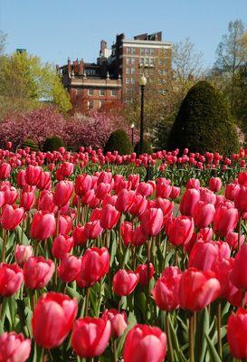 Boston Common