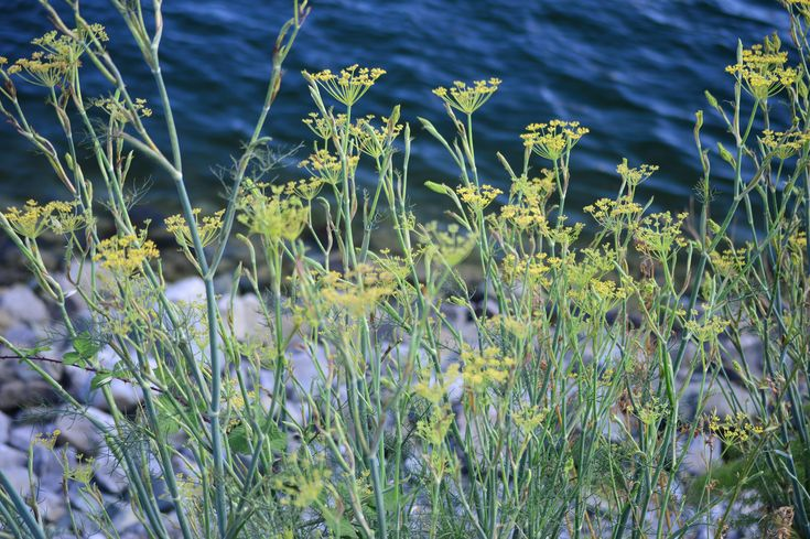 Weeds Against Water