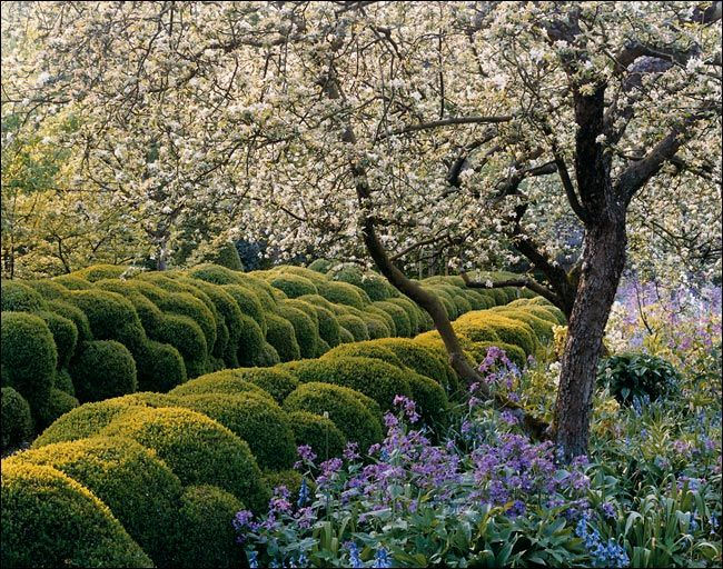 jacques wirtz's own garden, with its famous boxwood hedges, in schoten, belgium