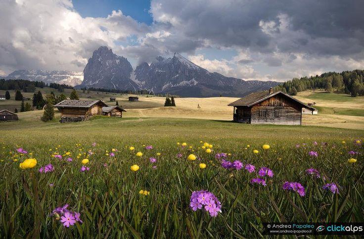 Alpe di Siusi Alto Adige Italy
