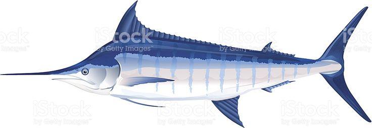 Peixe marlin-azul vetor e ilustração royalty-free royalty-free