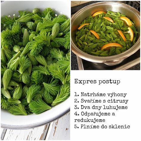 Sirup ze smrkových výhonků, pupenů, smrkový sirup - recept, postup, návod, příprava, suroviny - Bylinky pro všechny