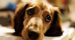 Pet Sitting: 10 Σημάδια όταν το σκυλί σας έχει άγχος
