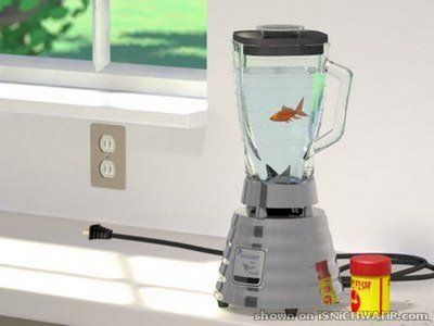30 best images about fishies i want on pinterest for Fish in a blender