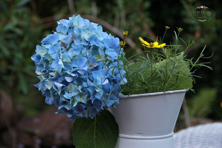 hortensja, kwiaty, flower