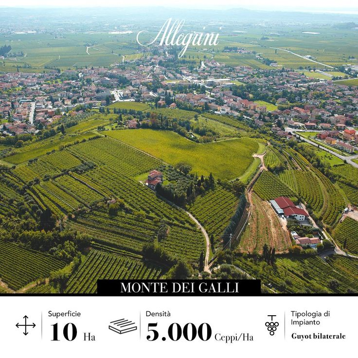 The position of the Monte Dei Galli vineyard in the South of the Fumane valley gives it fabulous exposure to noctornal thermals.  Come visit Allegrini and find out why they are so helpful to the grapes.