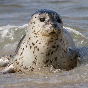 Harbor Seal Pup                                 15 Cutest Baby Animals on the Planet - Grandparents.com