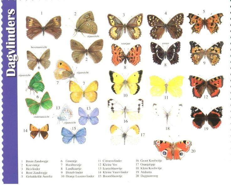 van der Meulen - butterflies