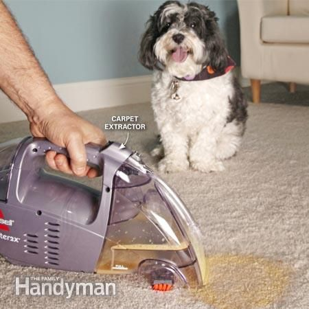 Carpet Cleaning Tips For Pet Owners Carpet Cleaning Tips