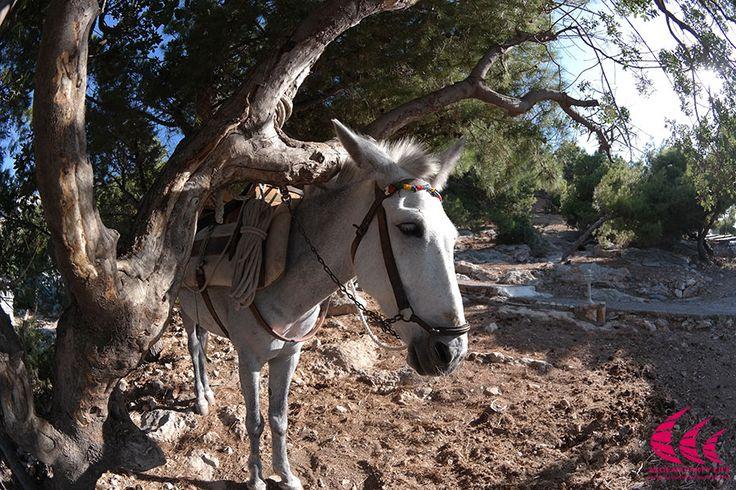 Ride with a Donkey ? Definately a Greek habit ;)
