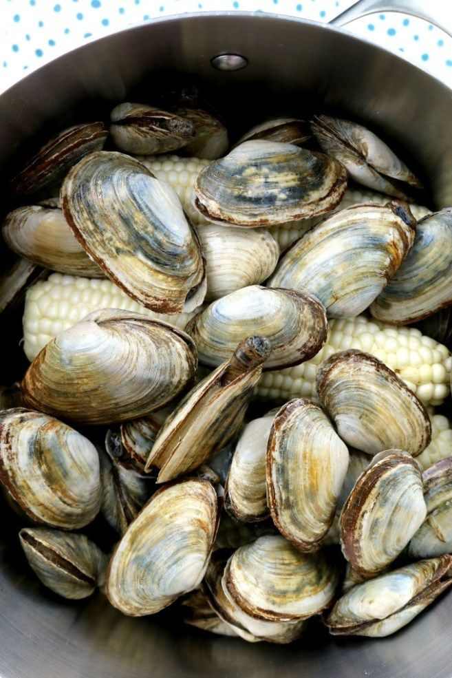 Steamed Clams Aka A Clam Boil Or Clambake Kitchen Dreaming Recipe Clam Bake Steamed Clams Boiled Food