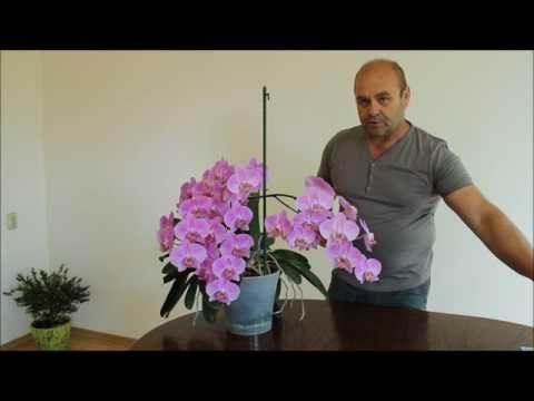 Орхидея. Как вырастить сильное здоровое растение. Часть вторая. - YouTube