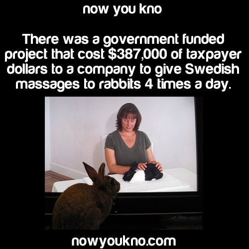 Always looking for great ways to piss away taxpayer's money.
