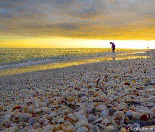 Sanibel Stoop During A Golden Sunset Island Captiva Sea Shells