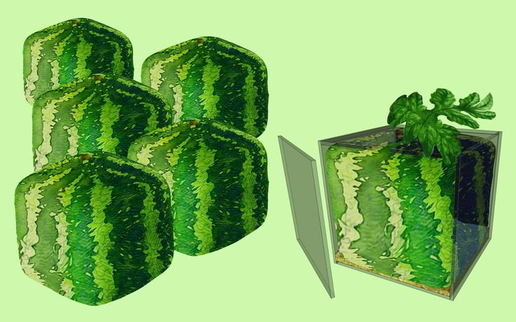 How to Grow a Square Watermelon -- via wikiHow.com