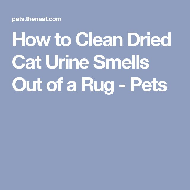 How to Clean Dried Cat Urine Smells Out of a Rug - Pets