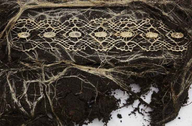 Met behulp van onderaardse sjablonen die dienst doen als mallen wordt het wortelstelsel van planten in banen geleid, zodat het zich tot een textielachtig materiaal vormt. Tijdens het groeiproces voegen de wortels zich naar de patronen en weeft of vlecht het wortelmateriaal zichzelf. Diana Scherer werkt in haar onderzoek samen met biologen en ecologen van de Radboud Universiteit in Nijmegen.