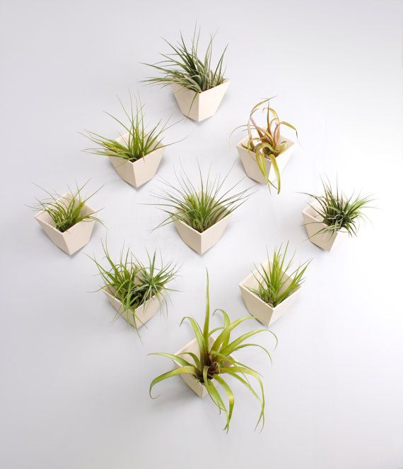 Hive planter with free air plant by lightandladder on Etsy, $45.00