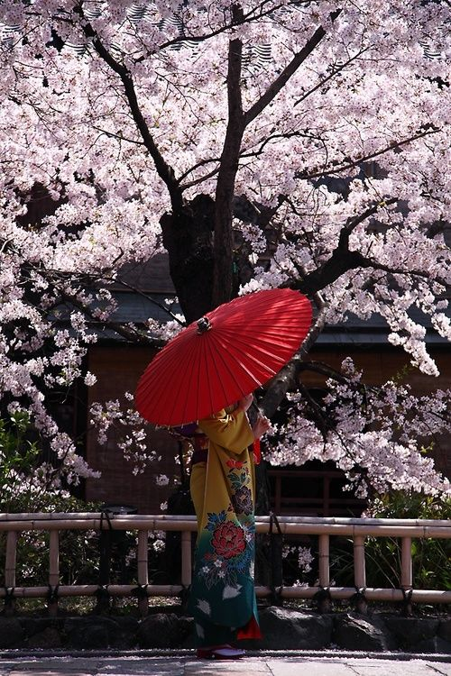 Girl under the sakura, Japan.                                                                                                                                                     Mais