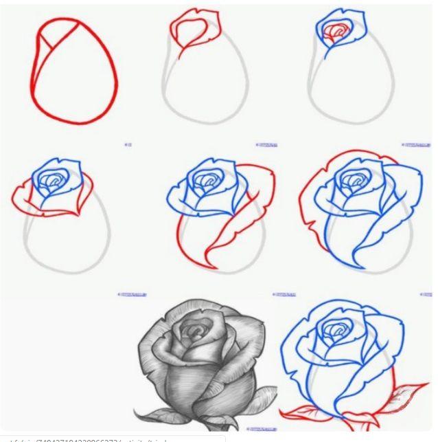 Dessin Rose Pink Art Etape Fleur Flower Art Plante Dessin Fleur Dessin De Roses Dessin Rose