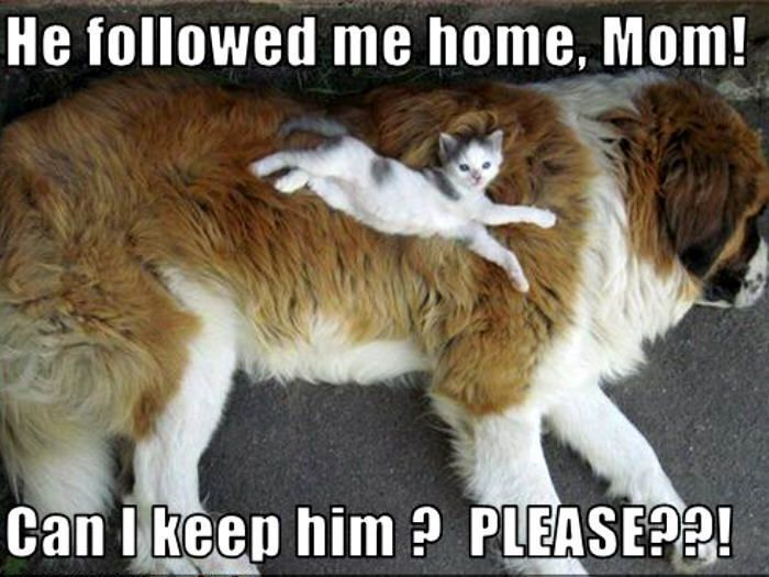 Cat Dog Funny Cute Animals Funny Animal Pictures Dog Friends