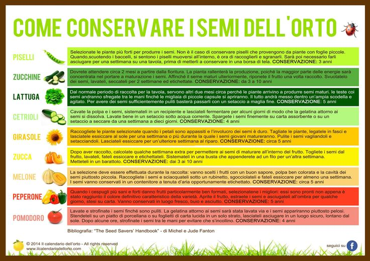 Come conservare i semi dell'orto
