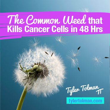 Holistic Cancer Treatment - Dandelion Tea Kills Cancer Cells