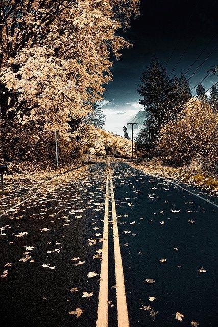 Autumn road Washington