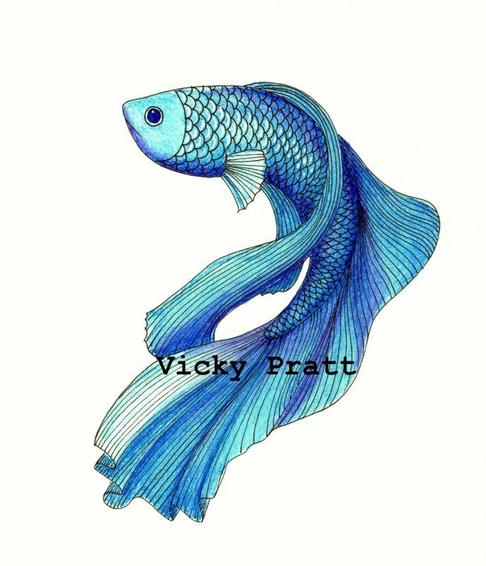 By Vicky Pratt. Inktense pencils and fineliner. Siamese Fighting fish or Beta fish. For Inktober 2015. www.vicpratt.wix.com/vickypratt Find me on FB and IG Vicky Pratt - Illustrator.
