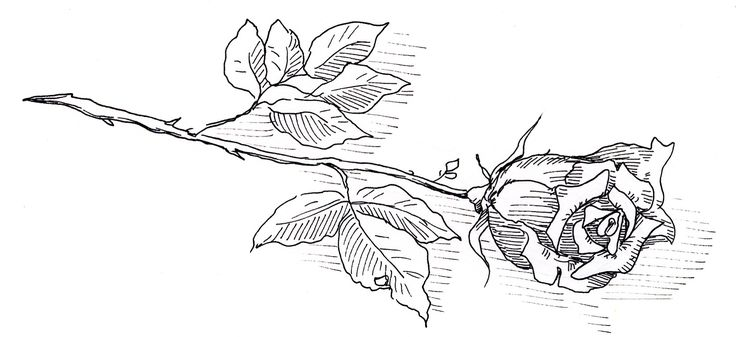 http://kuendigs.ch/images/11-rose.jpg