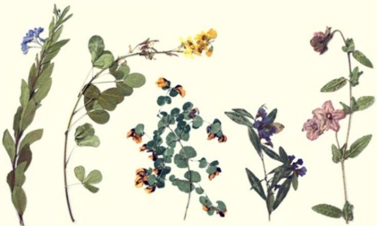 Herbaryum Nedir?