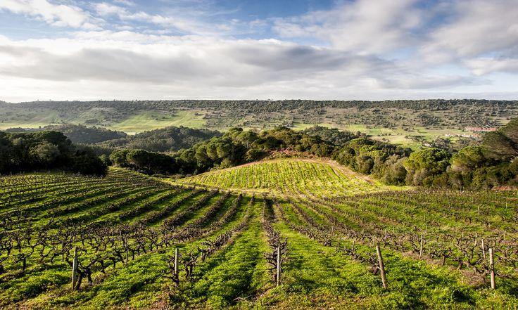 https://flic.kr/p/AUrHMB | Vineyard #blue #green #field #vineyard #horizon