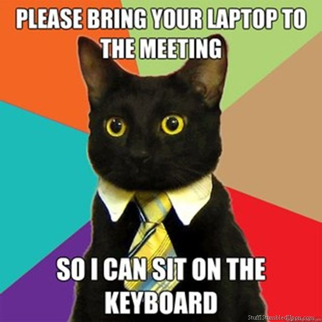 lol Business cat meme