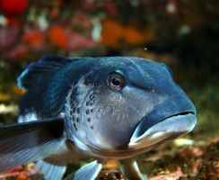 TEACHING RESOURCES: Life in the Sea -  Exploring New Zealand's marine environments