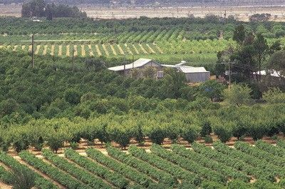 Riverland: This is the powerhouse of wine grape growing in Australia. The biggest fruit bowl, contributing to a huge amount of wine, and with a specialty in bulk grape production for the big companies. http://www.winemarket.com.au/WINEMARKET-101/THE-RIVERLAND-WINE-REGION