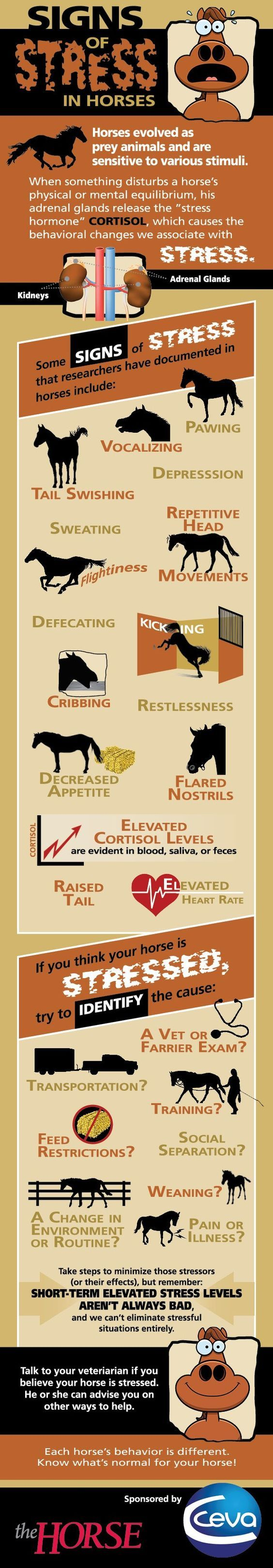 Infographic: Signs of Stress in Horses   TheHorse.com