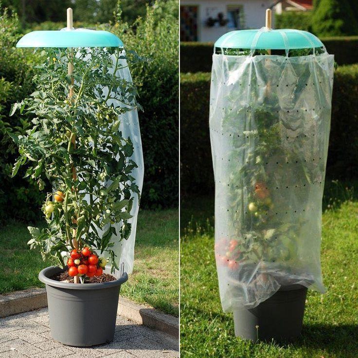 Tomaten Und Pfefferpflanzen Lieben Einen Geschutzten Sonnigen Ort Tom Garten Pflanzen Pflanzideen