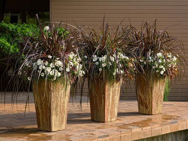 17 best images about home garden on pinterest gardens for Best ornamental grasses for pots