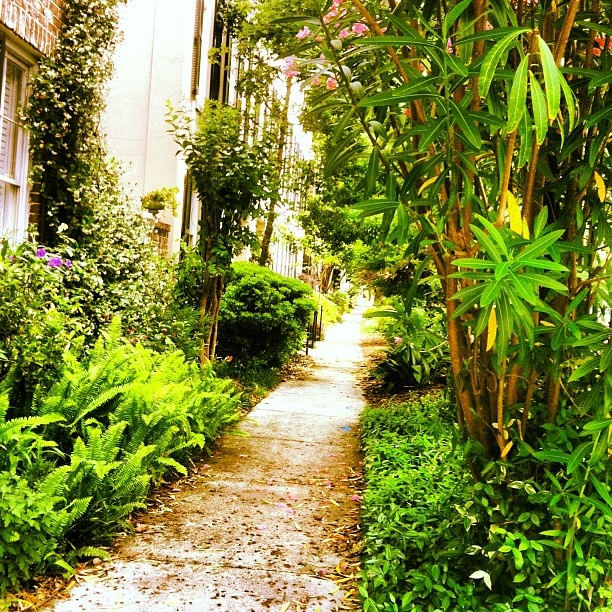 Lush vegetation and bright light in Savannah, Georgia.