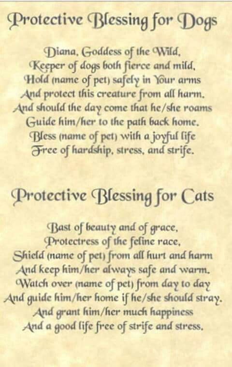 Dog Cat Protective Blessing Spells Amp Chants O